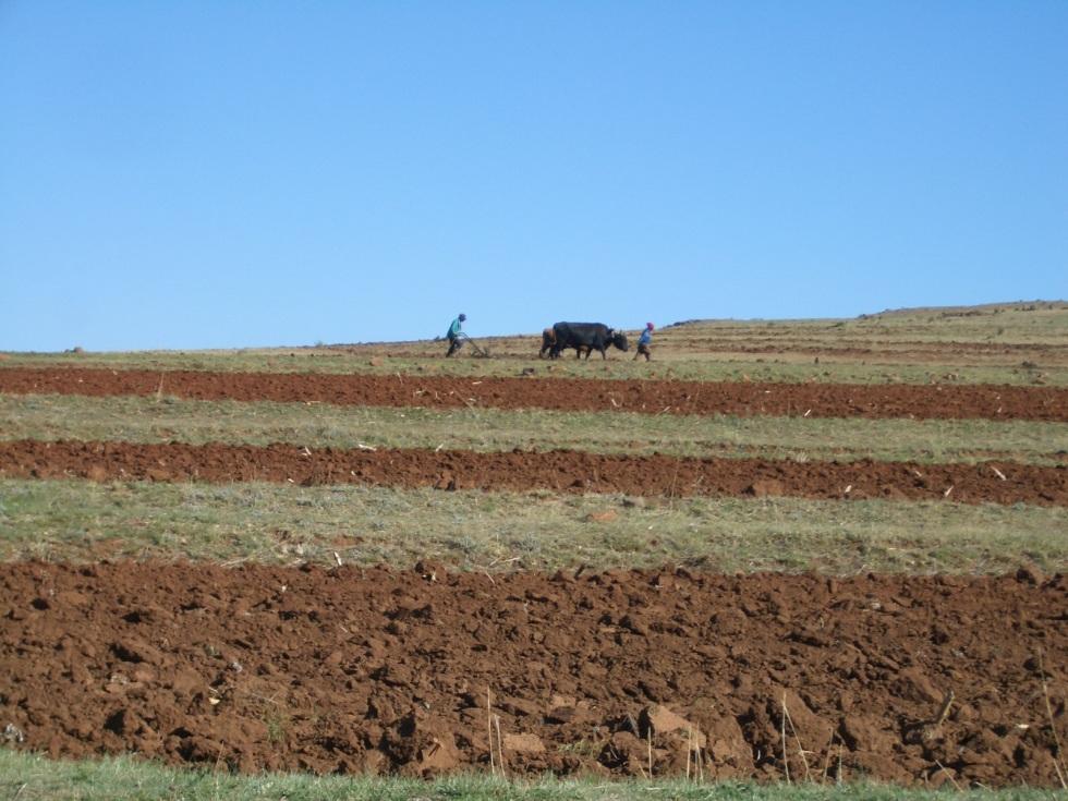 28 Lesotho 32